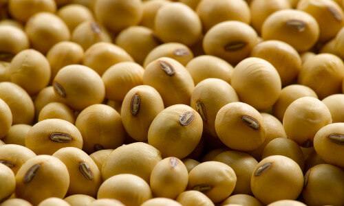 china's dependence on soybean imports to increase