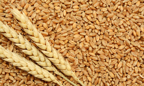 dry weather ukraine send wheat prices higher